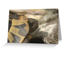 The European tortoise, an increasingly threatened species  Greeting Card