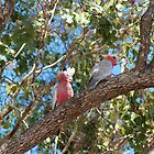 A pair of Galahs by Margaret Stanton