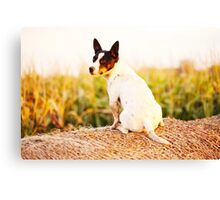 Eddie the Jack Russell Canvas Print