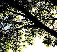 Green Leafy tree by Jocelyn  Emswiler