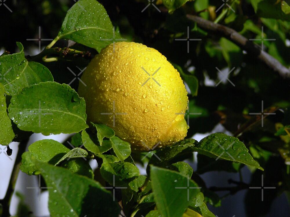 Lemon Spattered With Rain by Sandra Chung