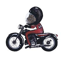 MEOW RIDER by Hares & Critters