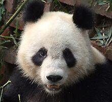 Panda by gail