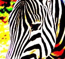 Funky Zebra by Andrew Wilson