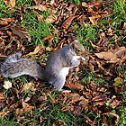 I knew I hid that nut somewhere round here. by John (Mike)  Dobson
