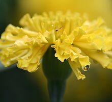 Carnation Bug by Karissa Carlson