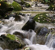 Flowing Creek by Karissa Carlson