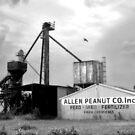 Allen Peanuts by Che Graves