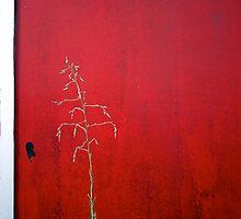 Lonely Weed by Matt Hobbs