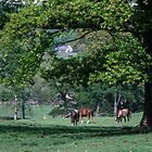 Horses grazing on farm Troutbeck England 198405190009 by Fred Mitchell