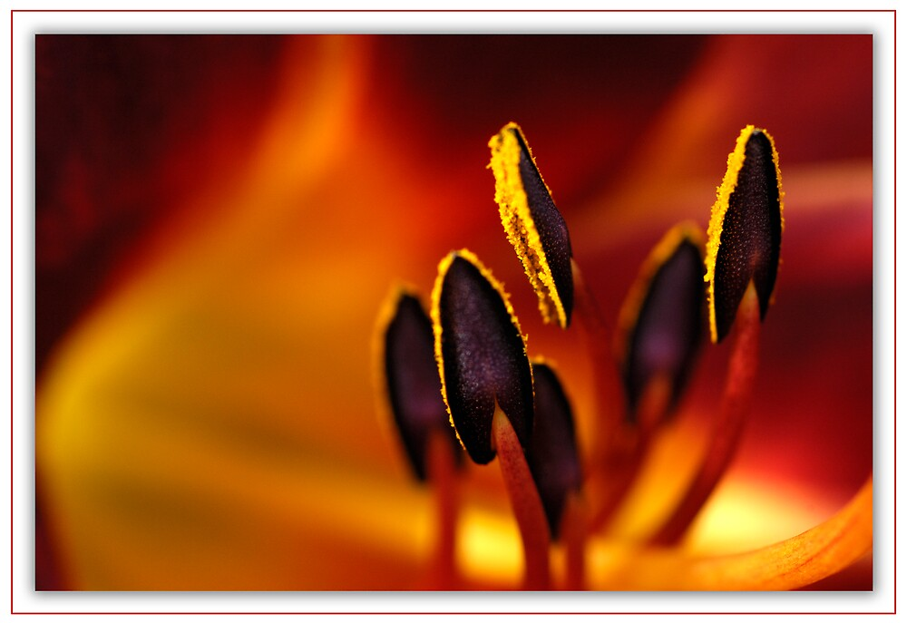 Up Close & Personal 2 by BigPix
