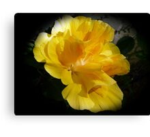Beautiful double yellow hibiscus on black Canvas Print