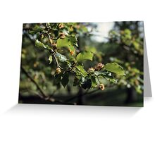 Tree blossoms Troutbeck England 198405190014  Greeting Card