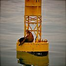 Oh buoy ! by Nancy Richard