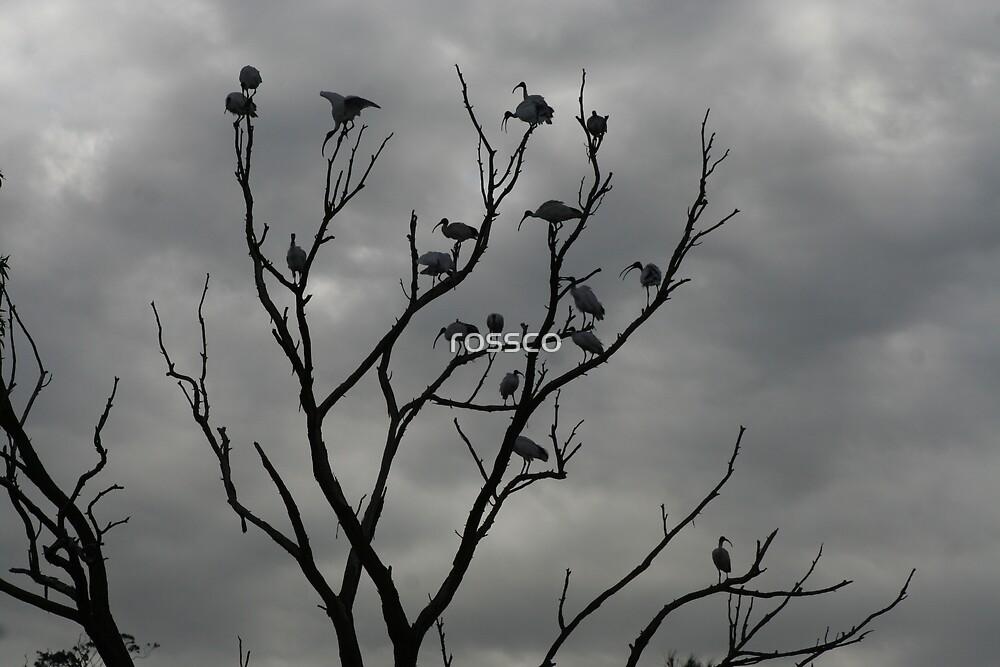 Birds Retreat by rossco