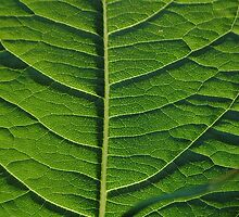 Green leaf by authentic