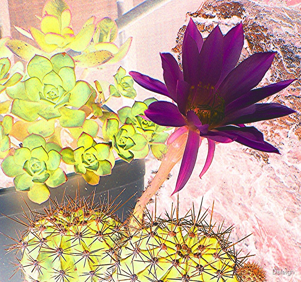 Bloomin' Cactus by Daleigh