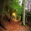Fern Trail at ClearCreek  by TrendleEllwood