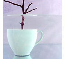 Tree Cup Photographic Print