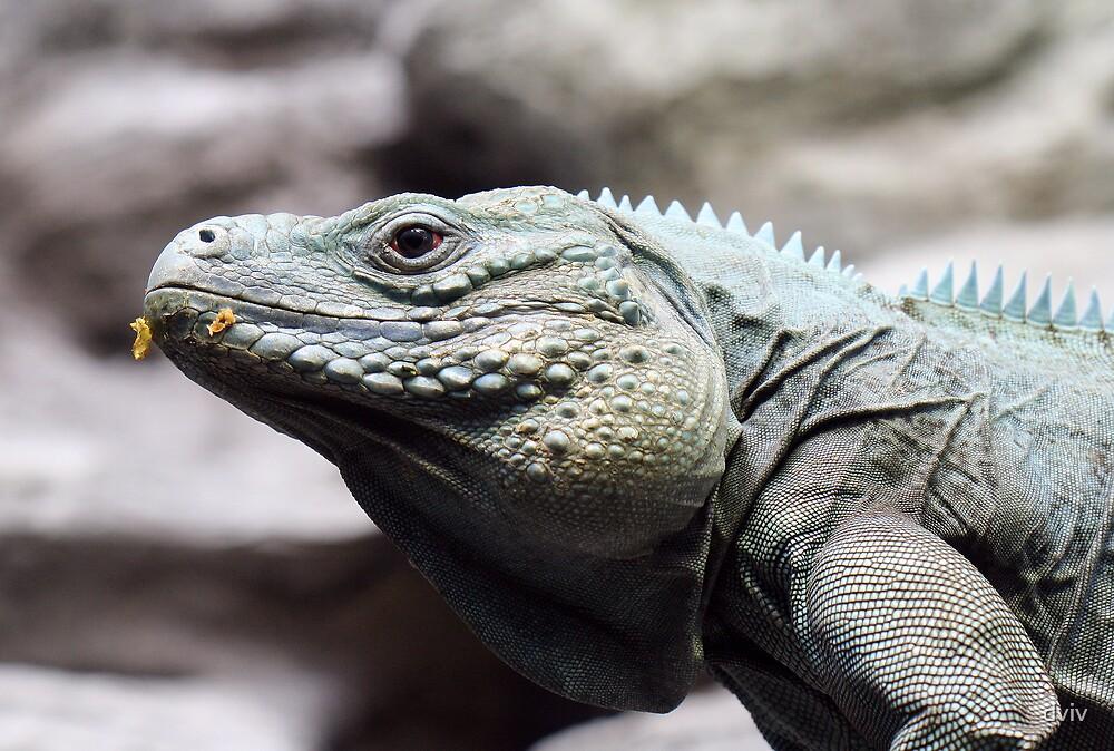 Iguana by dviv