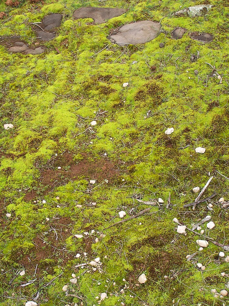 Green Moss by Princessbren2006