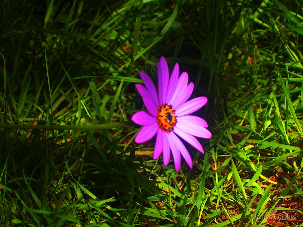 Purple Flower by James Knights