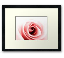 Rose close up Framed Print
