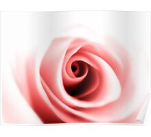 Rose close up Poster