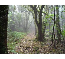 Taranaki Jungle Photographic Print