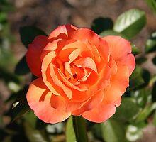 Flower by dviv
