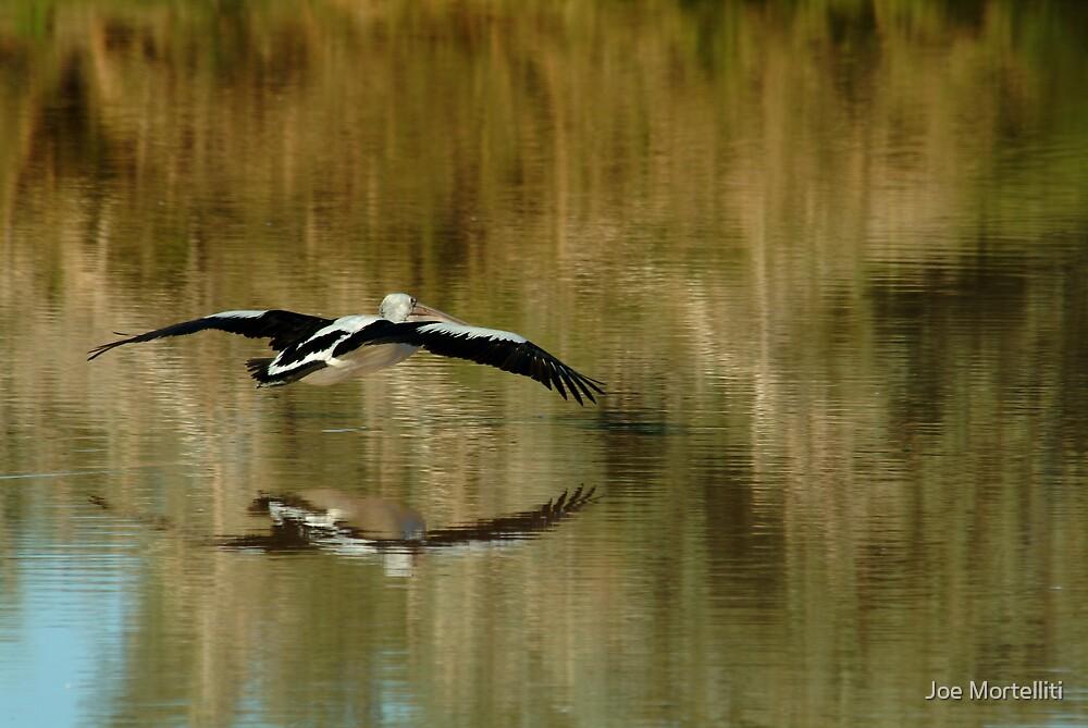 Pelican,Diamantina River, Outback Queensland by Joe Mortelliti