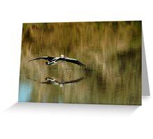 Pelican,Diamantina River, Outback Queensland Greeting Card