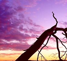 The Longest Goodbye by Craig Shillington
