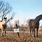 Stick Season by Nadya Johnson