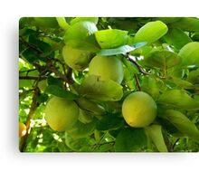Fresh Fruit    ^ Canvas Print