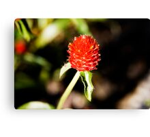 Red Spike Canvas Print