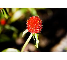 Red Spike Photographic Print
