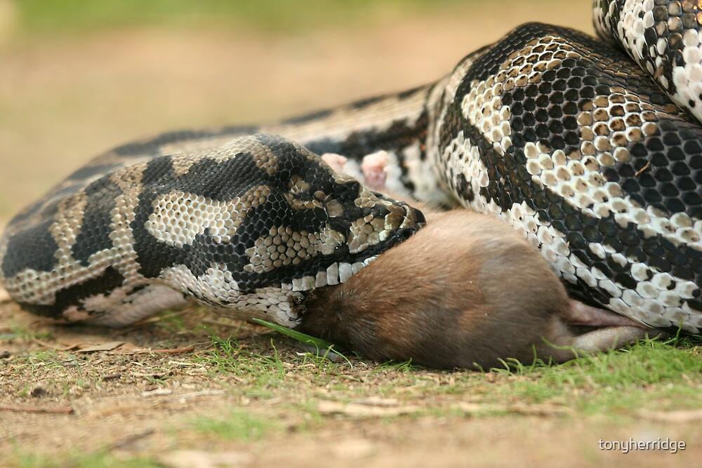 python 2 by tonyherridge