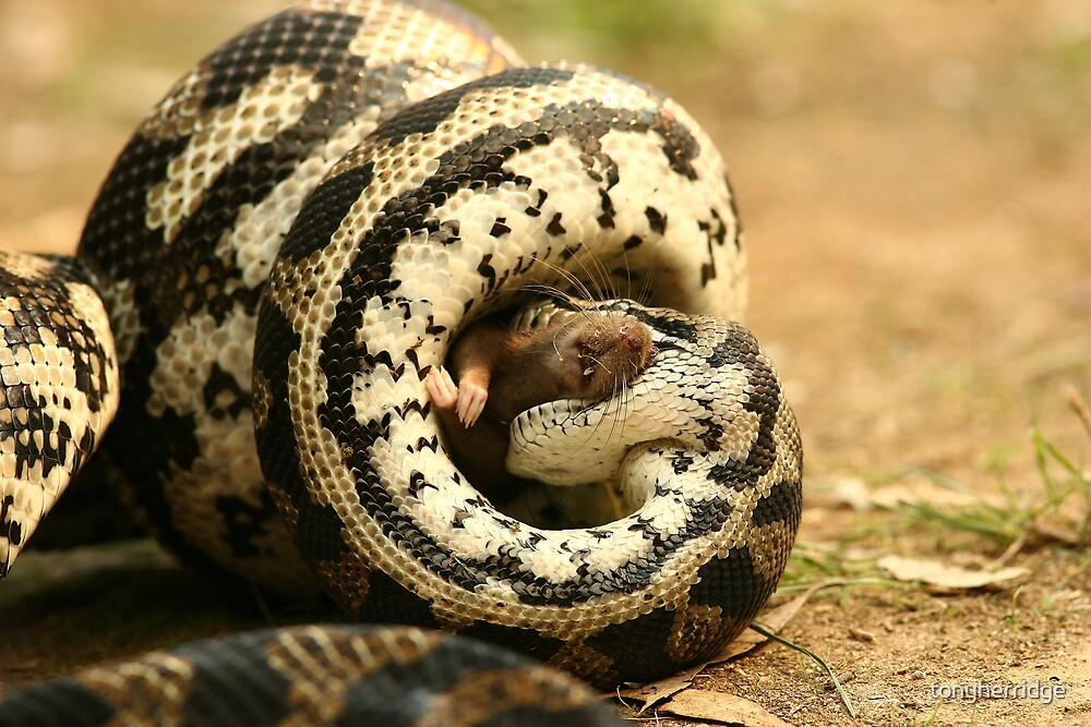 Python 5 by tonyherridge