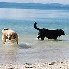 Fun in the sun - dogs having fun by lizdomett