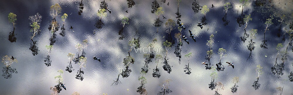 flooded forest by victor