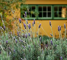Lavender Cottage by Joe Mortelliti