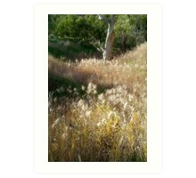 Grasses, Waurn Ponds Creek Bed Art Print