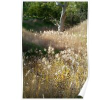 Grasses, Waurn Ponds Creek Bed Poster