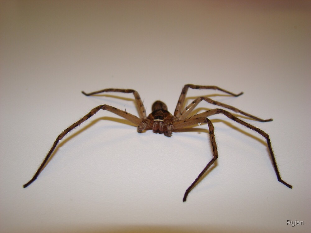 wood spider by Ryian