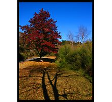 Autumn - Rotorua, NZ Photographic Print