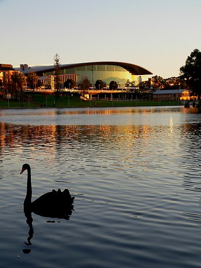 Along the Torrens by Shannon Mowling