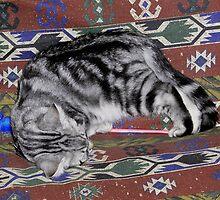 Asleep on his back feet by Sandra Chung