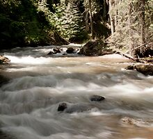Myrtle Creek, Kootenai National Wildlife Refuge by Harv Churchill