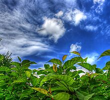 Sky and Plants by Christiaan